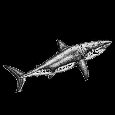 Piel de Tiburón